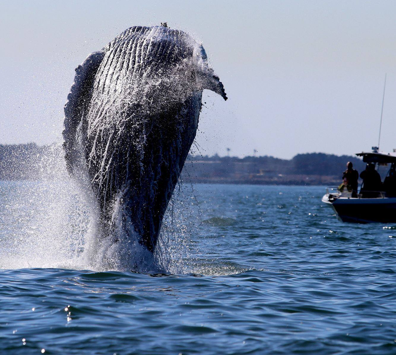 humpback whale douses boaters near cape henry 13newsnow com