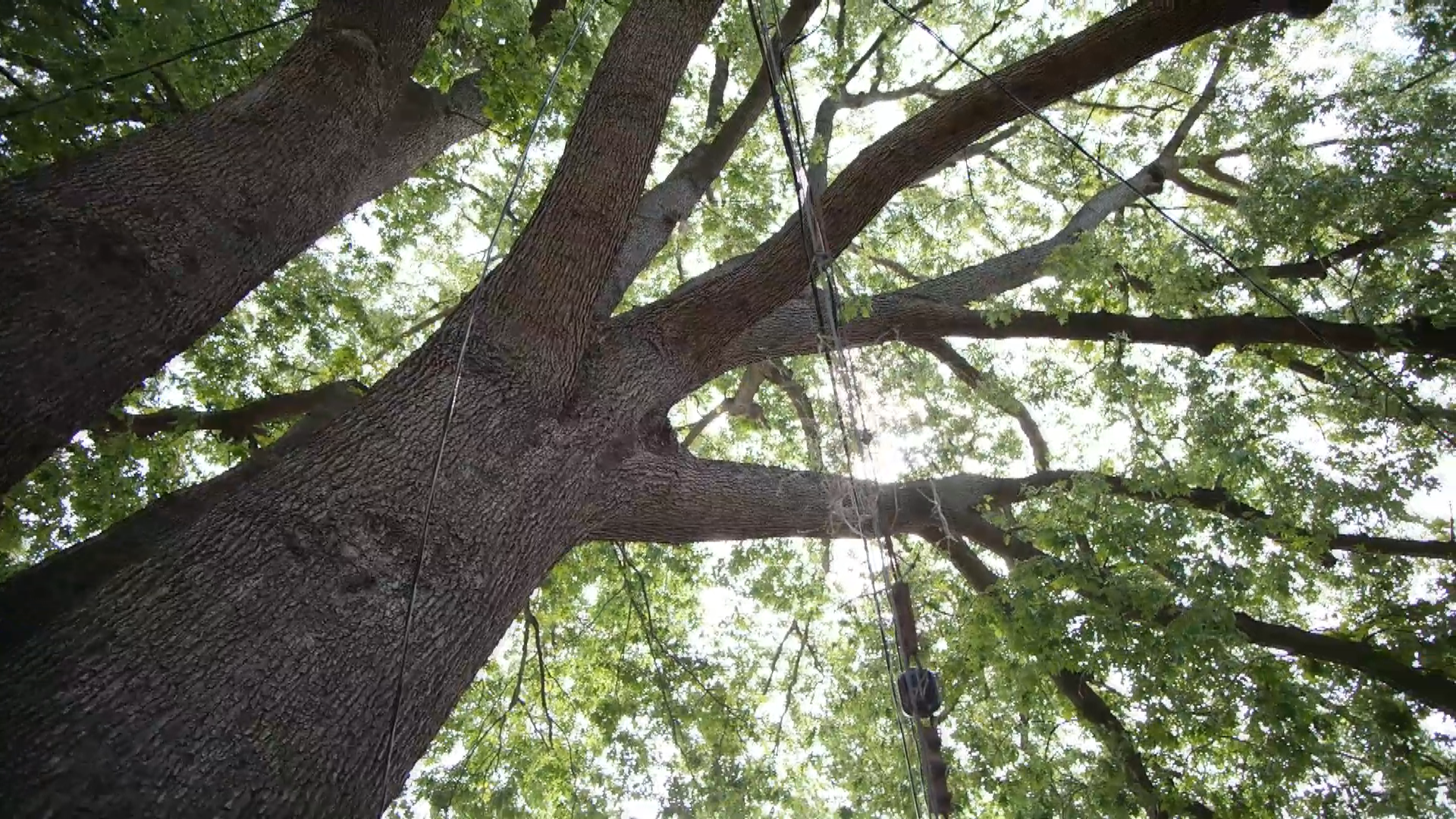 Hampton Roads home to biggest trees in Commonwealth ...