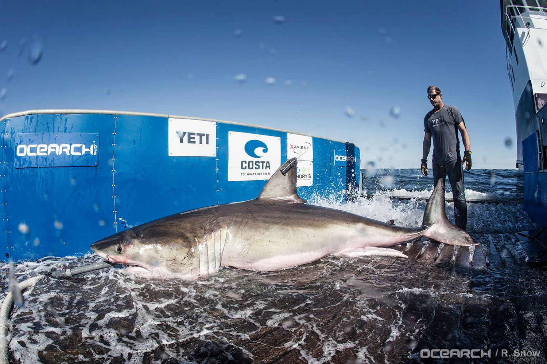Shark I - Morning Rush / Time To Drop